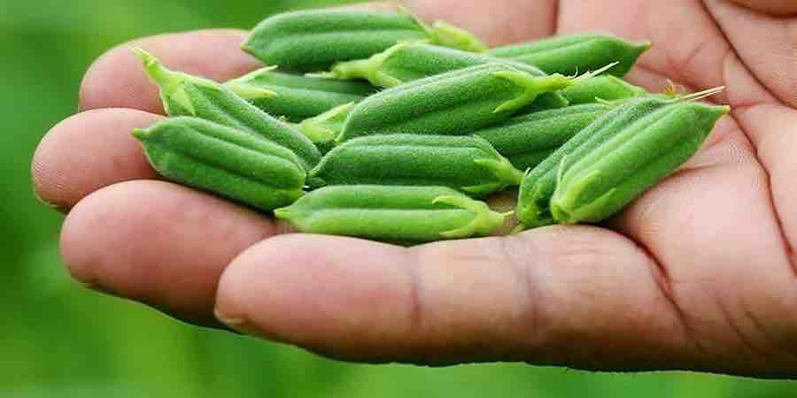 Semillas de sésamo sin gluten